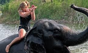 ขี่ช้างอย่าวางขอ